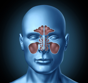 image of sinuses in the head in Birmingham, AL